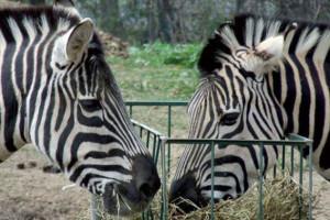 zoo-safari-italia-murazzano-langhe-e1426176902201